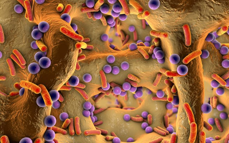 Long-term Erythromycin Use Has Modest Effect on Normal Bacteria in Upper Airways, Study Finds