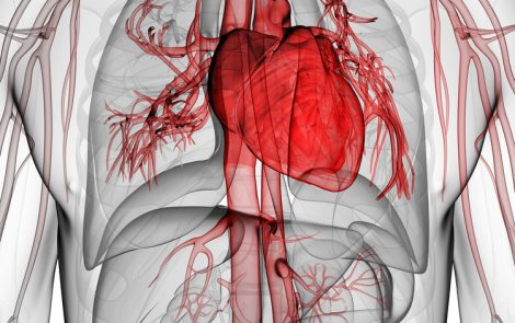 Cardiovascular Disease Raises Risk of Bronchiectasis Exacerbations, Study Reports