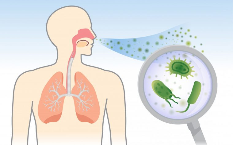 bacteria and the airways